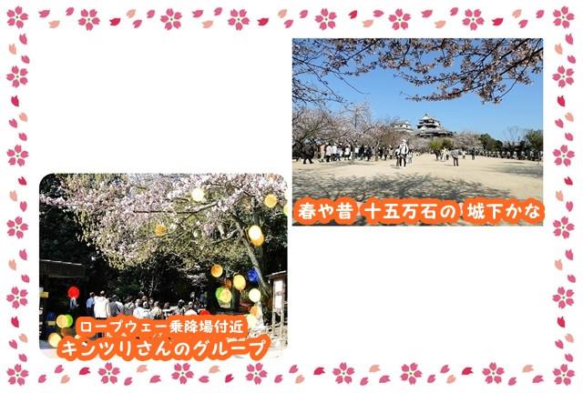 Frame_sakura_yoko2_2_2