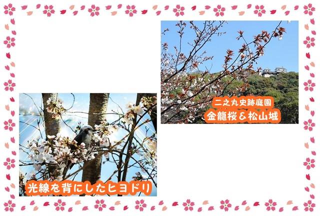 Frame_sakura_yoko2_3_2